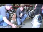 Moto Guzzi V7 Ambassador tank restoration with Ewan McGregor in HD